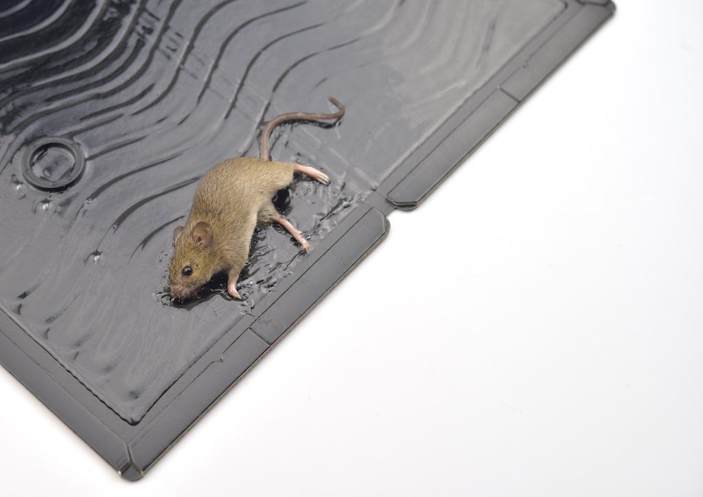 ネズミ取りシート