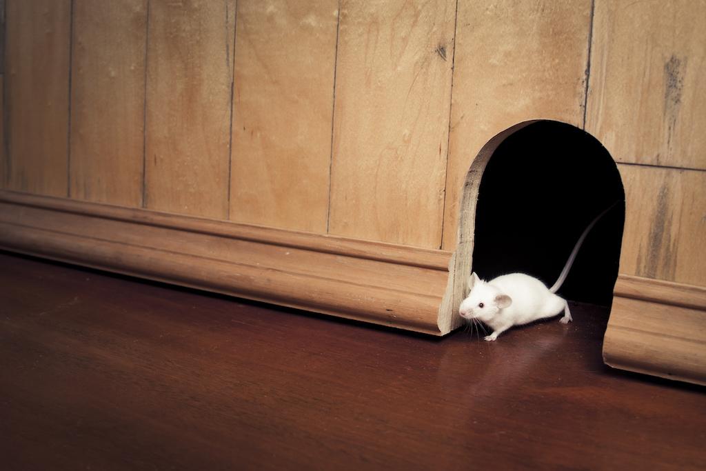 ネズミが侵入するスキマ